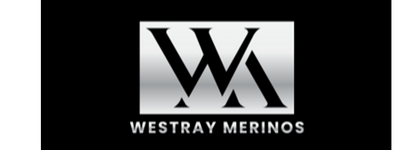 Westray Poll Merinos