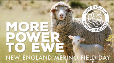 New England Merino Field Day